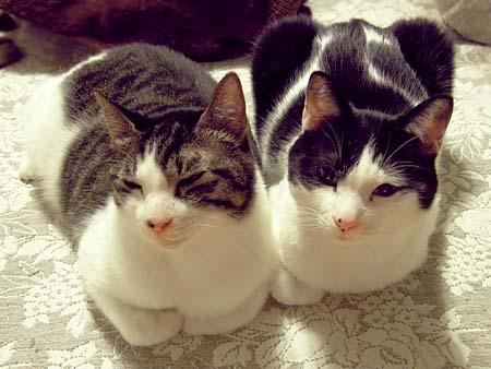 catnap2.jpg