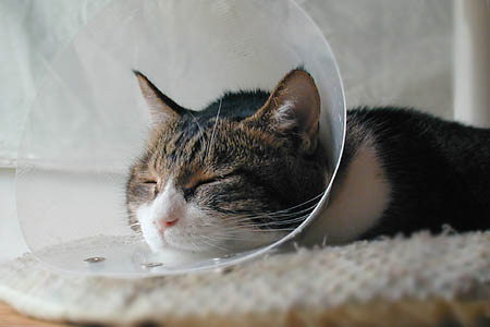 器うつわ猫皿ネコ皿手作り足つき脚付き